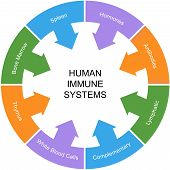 stock photo of hormone  - Immune System Word Circle Concept with great terms such as spleen hormones antibodies and more - JPG