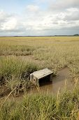 picture of marsh grass  - An old television set lays on mud among grass on a marsh - JPG