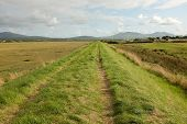 image of marshlands  - Lush green grass and a track on a dyke running through marshland with a blue cloudy sky and mountains in the distance - JPG