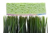stock photo of spring-cleaning  - A sponge on top of fresh green grass represents Spring Cleaning - JPG