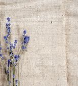 image of flax plant  - sack texture background with dry blue flowers - JPG