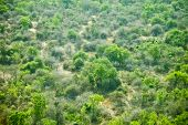 picture of sudan  - low aerial view of the wilderness of South Sudan - JPG