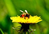 pic of steppes  - Much different small insects inhabit steppe and wood  - JPG