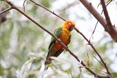 stock photo of parakeet  - parakeet or parrot is sleeping on tree branch in the garden - JPG