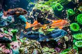 foto of grouper  - Several Interesting Colorful Grouper - JPG