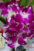 foto of south east asia  - orchids is a beautiful flower in south east asia - JPG