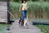 picture of dock a lake  - Two adorable dogs and children running on wooden dock on the lake - JPG