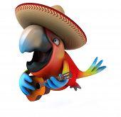 foto of parrots  - Fun parrot - JPG