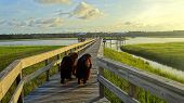 stock photo of dock  - A pair of black Newfoundland dogs walking on a dock over a Florida Marsh - JPG