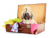 pic of dog clothes  - Cute Shih Tzu in suitcase with clothes isolated on white - JPG