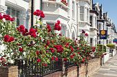 picture of english rose  - Row of Typical English Terraced Houses at London - JPG