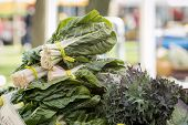 picture of leafy  - Fresh organic vegetables  - JPG