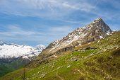 stock photo of italian alps  - Pasture and shepherd - JPG