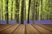 pic of harebell  - Beautiful carpet of bluebell flowers in Spring forest landscape with wooden planks floor - JPG