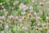 stock photo of weed  - Flower plant grass weed in the nature or in the garden