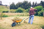 picture of wheelbarrow  - Back view of senior man raking hay with pitchfork and wheelbarrow on a field - JPG