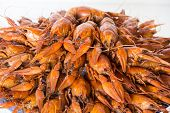 picture of crawfish  - Photo of red boiled crawfishes on the dish - JPG