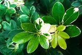 foto of leaf insect  - fresh green leaves young shoots of leaves close up - JPG