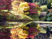 Colorful Tree And Pond