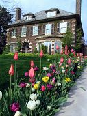 stock photo of profusion  - A house with a very profuse collection of tulips beside the driveway - JPG