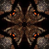 Seamless Symmetrical Pattern Abstract Fur Feathers Texture poster