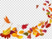 Autumn Falling Leaves. Leaf Fall, Wind Rises Autumnal Foliage And Yellow Leaves. Maple Tree Gold Fal poster