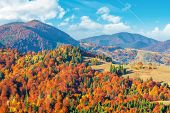 Wonderful Autumn Afternoon In Mountains. Trees On The Hill In Colorful Fall Foliage. Sunny Weather W poster