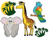 African Animals Collection poster