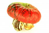 stock photo of turban  - Turban Squash is with very interesting shape like head with turban and colors isolated over white background - JPG