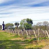 The Wine Walk, Uruguay