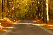Road in the autumn.