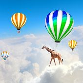 Giraffe flying high in sky on colorful aerostat
