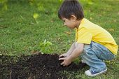 Side view of a young boy planting a young plant in the park
