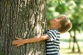 stock photo of natural blonde  - Little boy hugging a tree - JPG