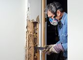 image of respirator  - Man prying sheetrock and wood damaged by termite infestation in house - JPG