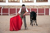 foto of bullfighting  - Bullfighter performs in order to select animals for breed braves fighting bulls on July 31 2009 in Olivenza Spain - JPG