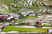 Rice fields in the Batad village in Philippines