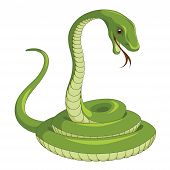 pic of green snake  - Vector illustration of a green Snake isolated on a white background - JPG