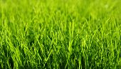 stock photo of grass area  - Background of a green grass - JPG