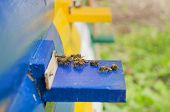 picture of bee-hive  - Honey bee hives - JPG