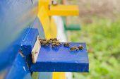 foto of honey bee hive  - Honey bee hives - JPG