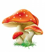 picture of magical-mushroom  - red fly agarics mushrooms on a white background - JPG