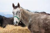 image of horses eating  - beautiful Close - JPG