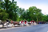 stock photo of carriage horse  - Central Park horse carriage rides in Manhattan New York US - JPG