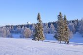Постер, плакат: Grove of trees on a snowy meadow