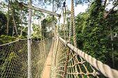 pic of canopy  - Canopy walkway in Kakum National Park Accra Region Ghana West Africa - JPG