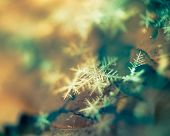 picture of extreme close-up  - Extremely close up image of snowflakes vintage photo effect - JPG