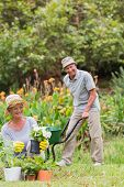 image of grandfather  - Happy grandmother and grandfather gardening on a sunny day - JPG
