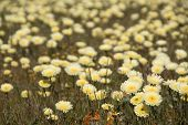 pic of antelope  - Antelope Valley Poppy Reserve in California photo taken in spring time - JPG