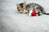 image of snatch  - Little kitten playing with ball of red wool and watches - JPG